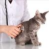 Ветеринарные клиники в Советском